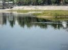 Река Ангара. Остров Юность