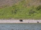Берег бурых медведей